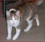 Naima, the Curious Cat